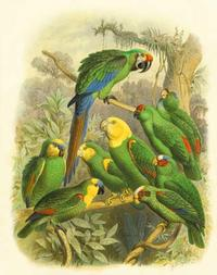 Cassel - Cassel Tropical Birds I