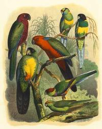 Cassel - Cassel Tropical Birds II